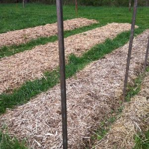 Permaculture Garden Beds Mulched and Ready for Planting