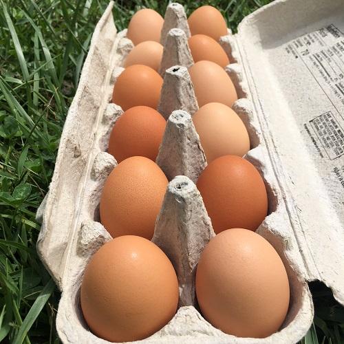 Organic Open-Forage Eggs