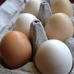 Open-Forage Eggs